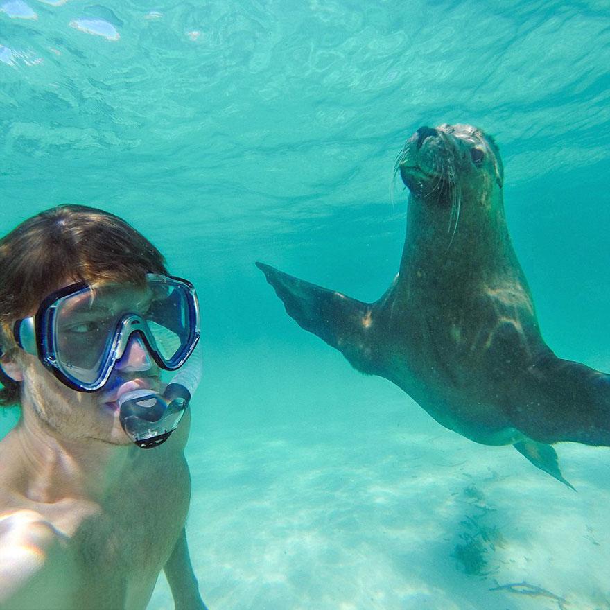 experto-selfies-animales-allan-dixon (4)