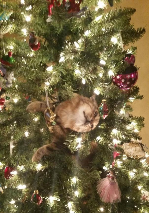 gatos-decorando-destruyendo-arbol-navidad (11)