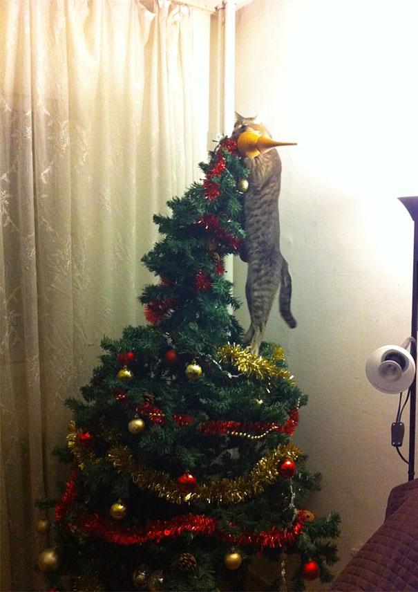 gatos-decorando-destruyendo-arbol-navidad (2)