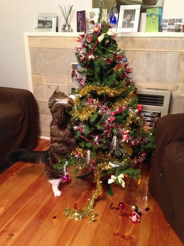 gatos-decorando-destruyendo-arbol-navidad (5)
