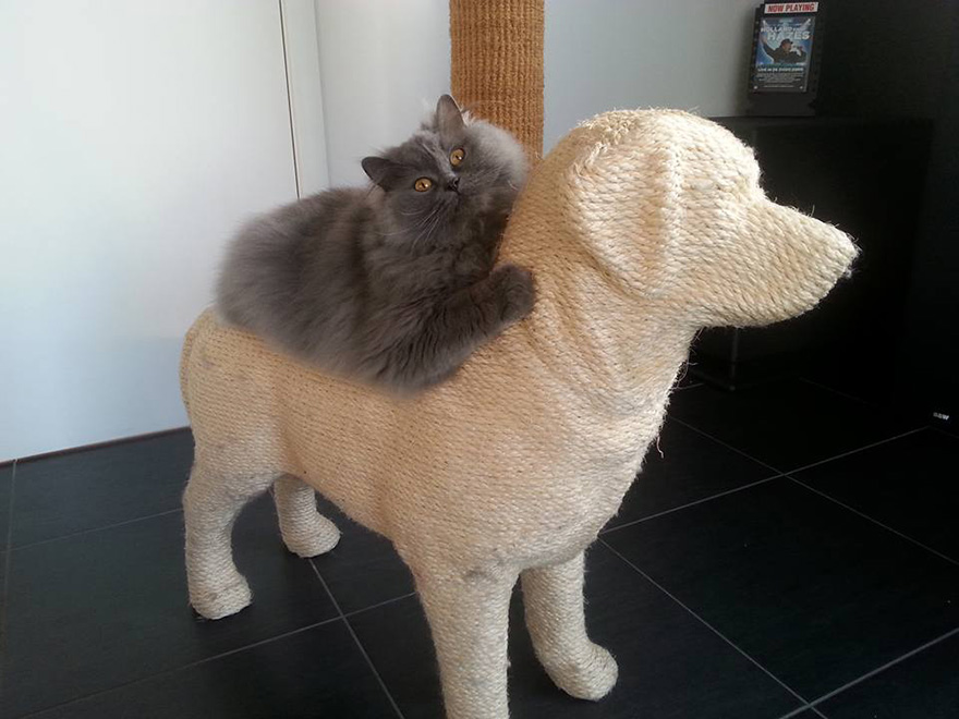 rascador-gatos-forma-perro-erik-stehmann (2)