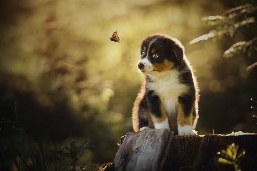 retratos-perros-naturaleza-anne-geier (15)