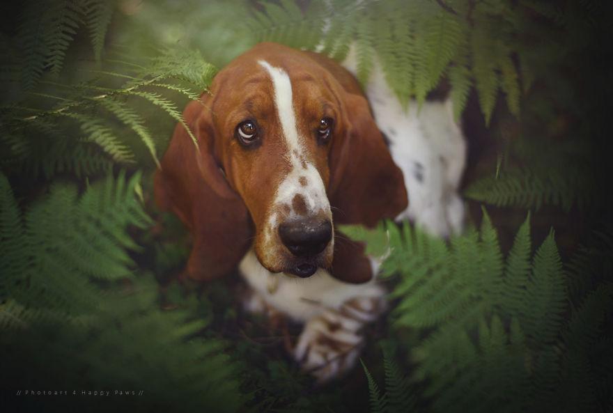 retratos-perros-naturaleza-anne-geier (24)