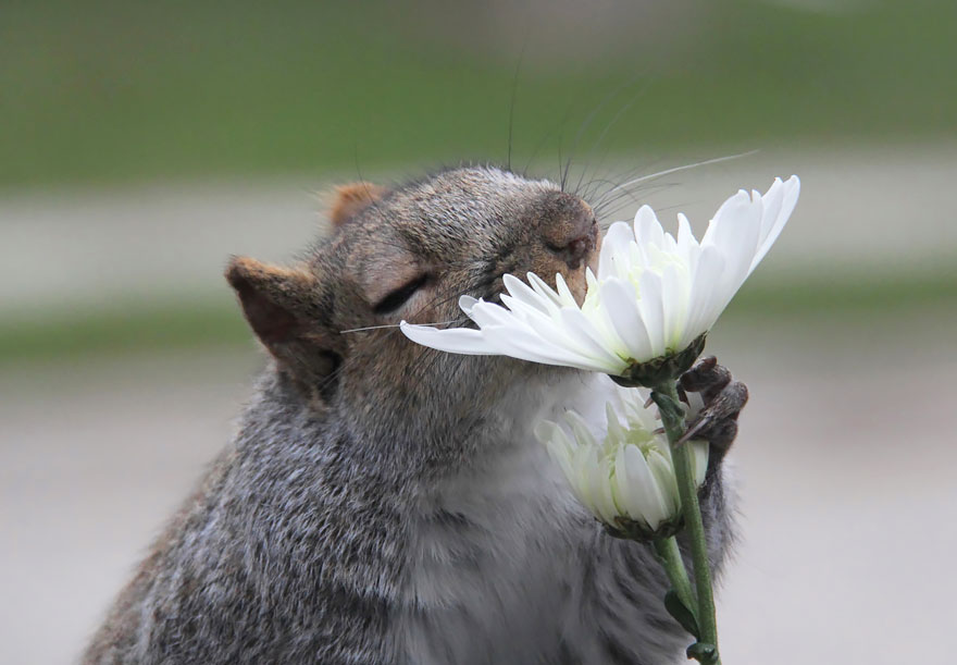animales-oliendo-flores (9)