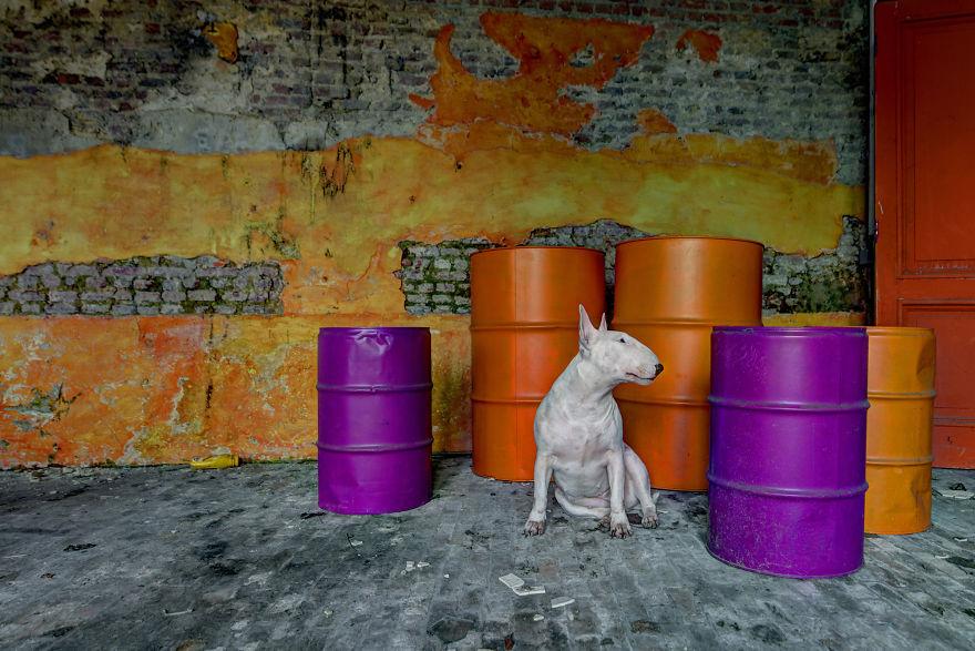 exploracion-lugares-abandonados-perro-claire-alice-van-kempen (20)