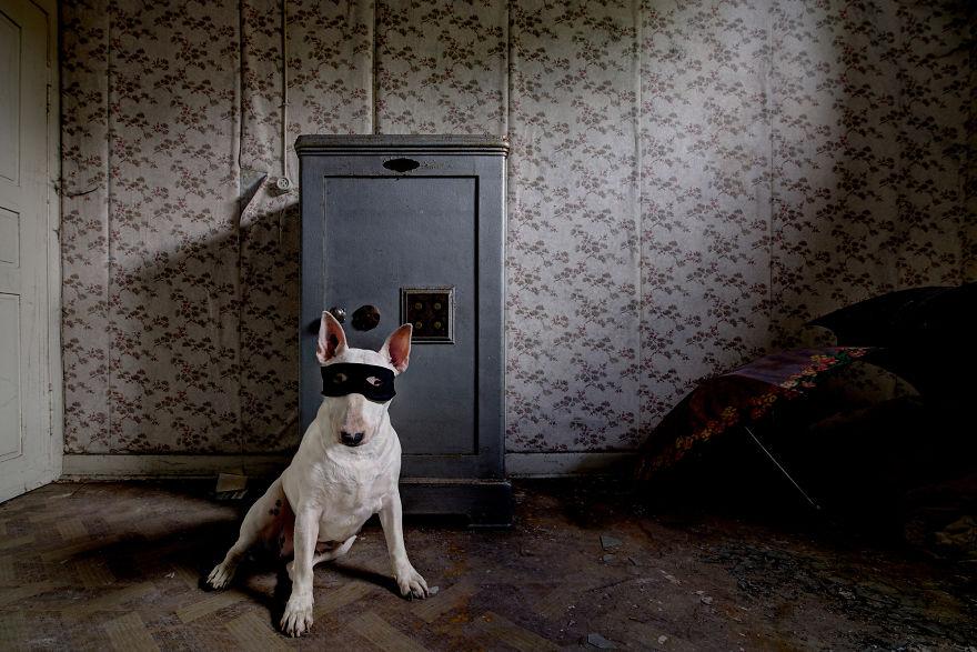 exploracion-lugares-abandonados-perro-claire-alice-van-kempen (8)