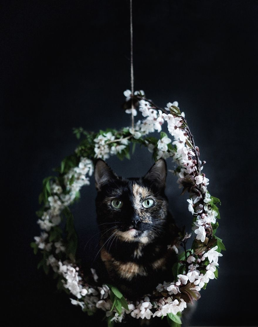 fotos-gato-estaciones (8)