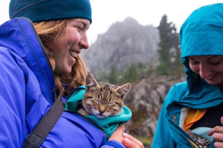 gatos-abandonados-aventureros-bolt-keel (8)