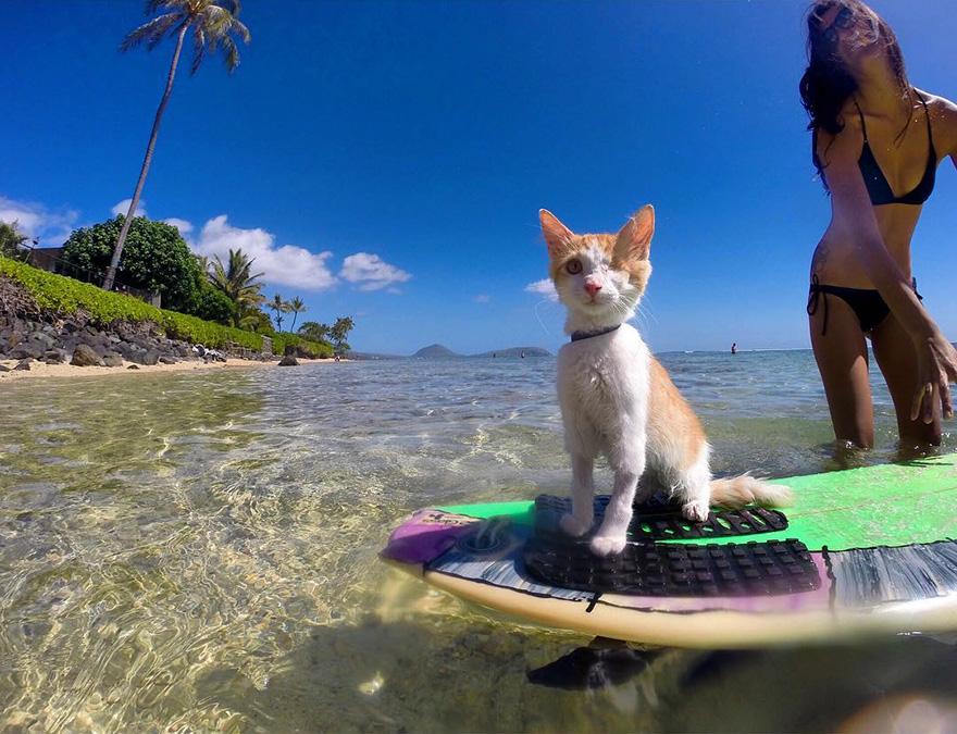 kuli-gato-tuerto-surfero-hawai (3)