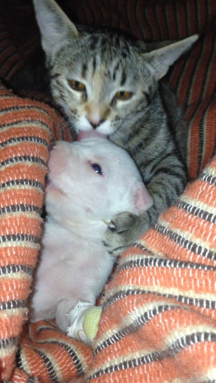 perro-nicolas-3-patas-adoptado-gatos (7)
