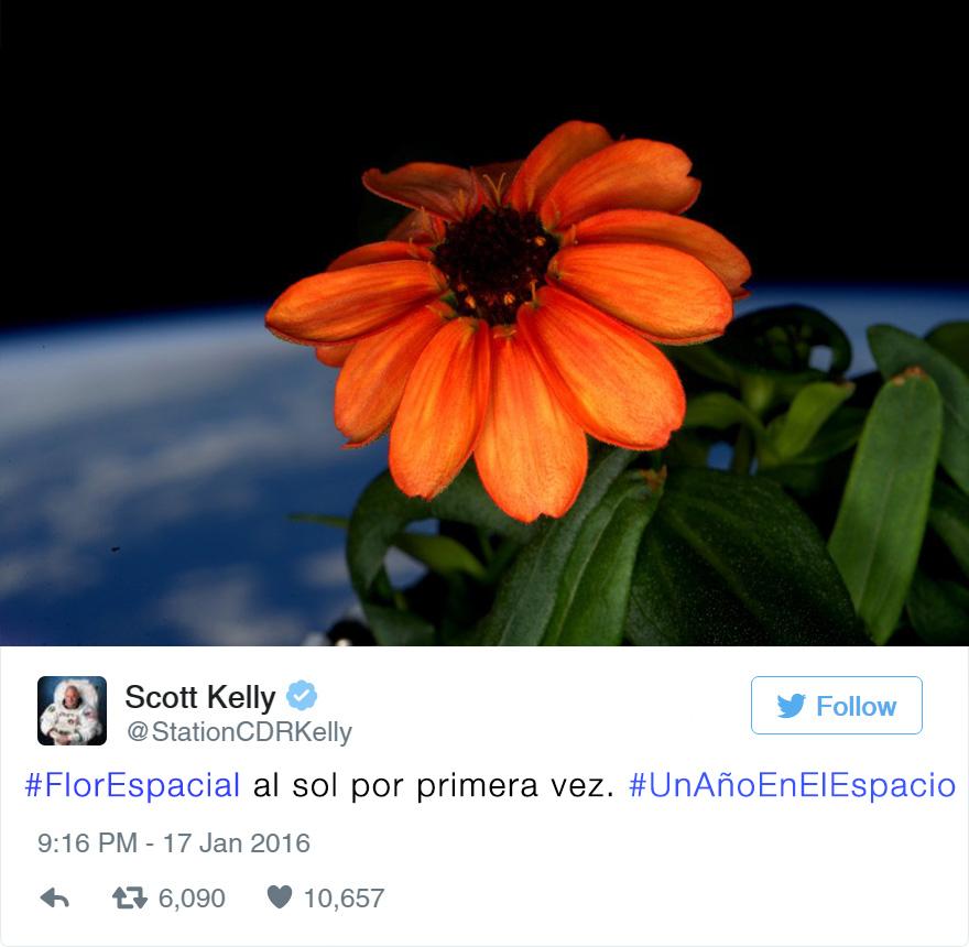 primera-flor-espacio-nasa-scott-kelly-3