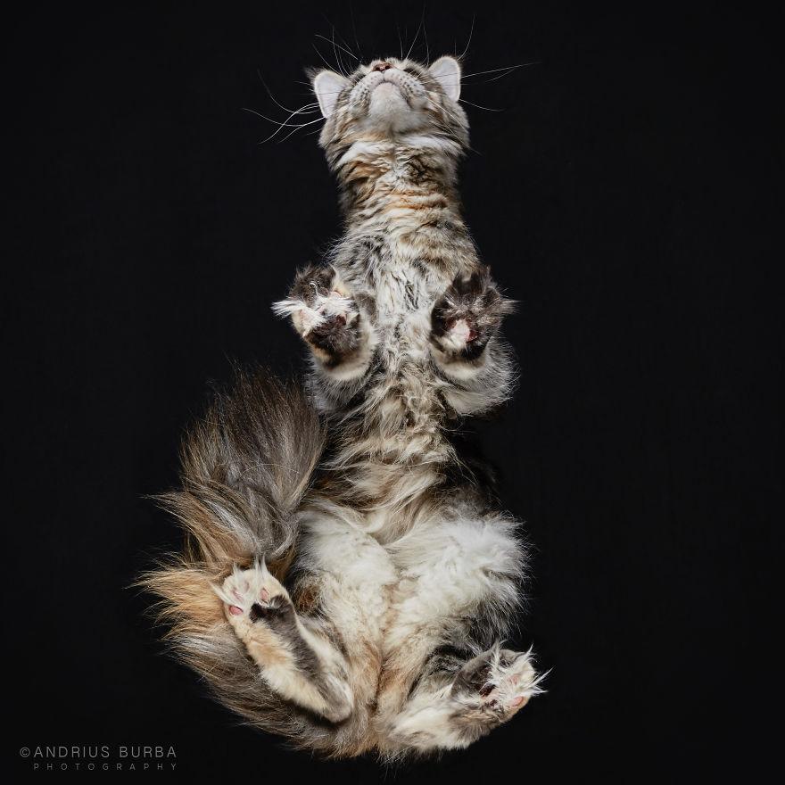under-cats-fotos-gatos-debajo-andrius-burba (14)