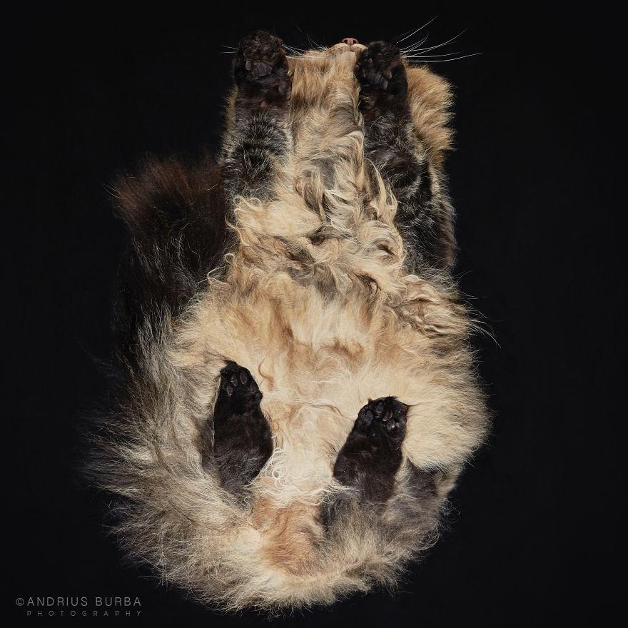 under-cats-fotos-gatos-debajo-andrius-burba (2)