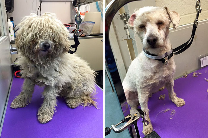 corte-pelo-gratis-perros-viejos-refugio-mark-imhof (1)