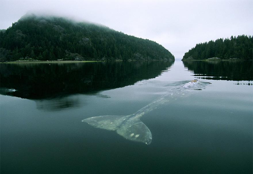 dia-mundial-ballenas (4)