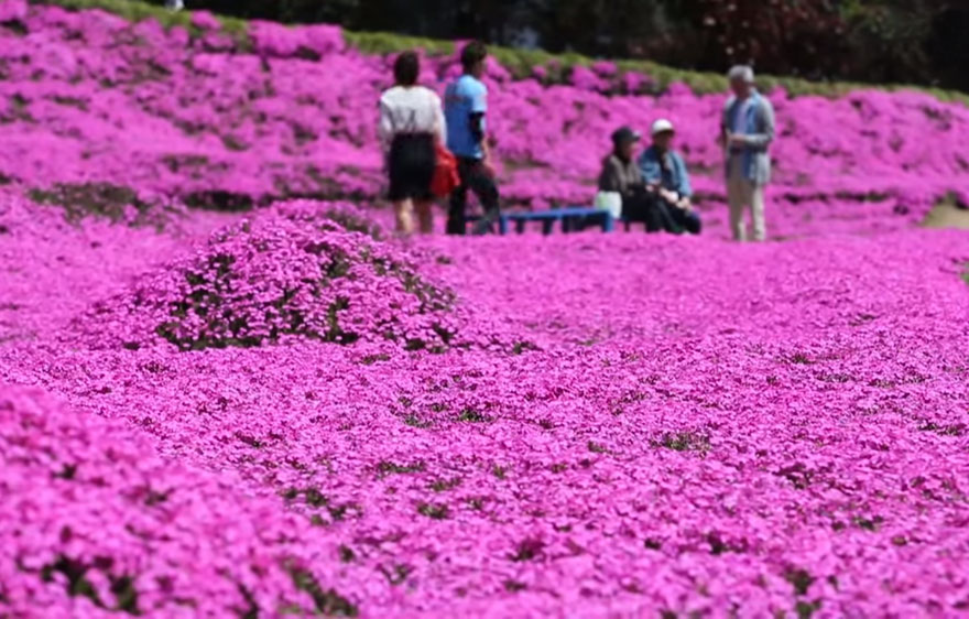 marido-planta-flores-esposa-ciega-kuroki-japon (10)