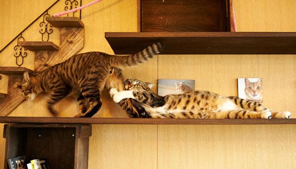parejas-gatos-san-valentin (12)