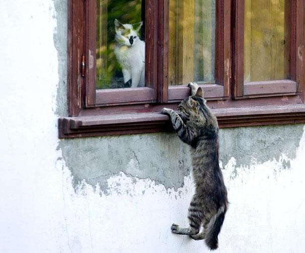 parejas-gatos-san-valentin (26)