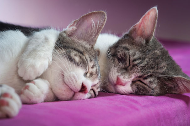 parejas-gatos-san-valentin (30)