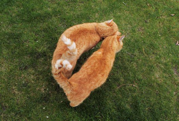 parejas-gatos-san-valentin (37)