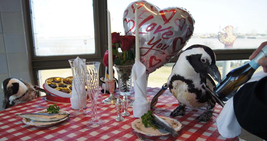 pinguinos-pareja-22-san-valentin-cena-audubon-aquarium (1)