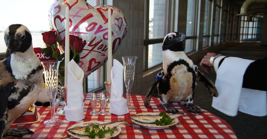 pinguinos-pareja-22-san-valentin-cena-audubon-aquarium (5)