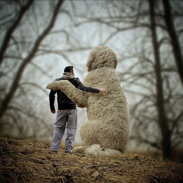 aventuras-juji-perro-gigante-photoshop-christopher-cline (8)
