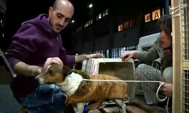 compra-refugio-250-perros-danielle-eden (4)