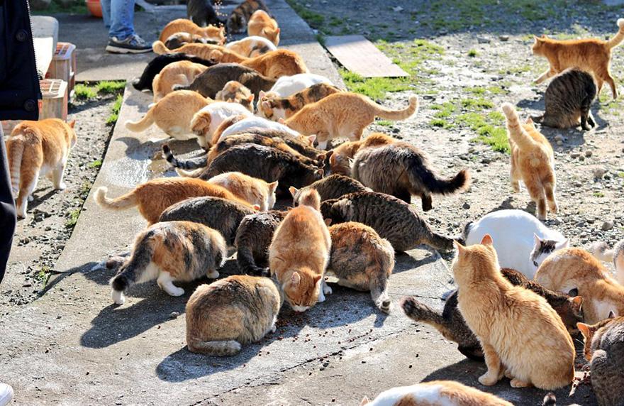 isla-gatos-aoshima-donaciones-comida-japon (3)