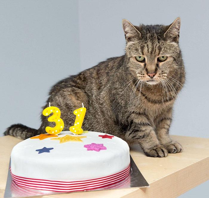 gato-viejo-31-anos-nutmeg (1)