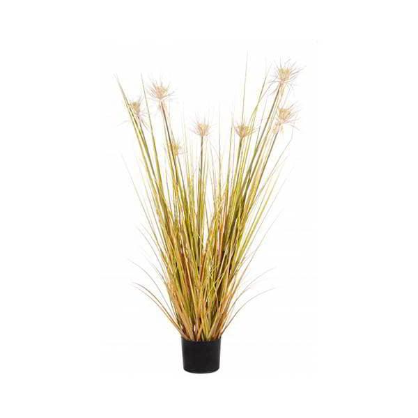planta-desierto-oro-borgia-conti