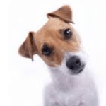 Boston pet friendly condos with price reductions