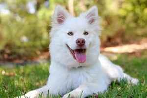 Bozeman Dog Friendly