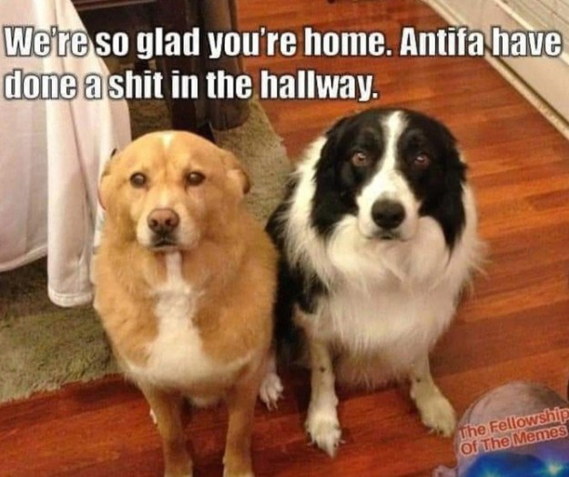 dogs antifa