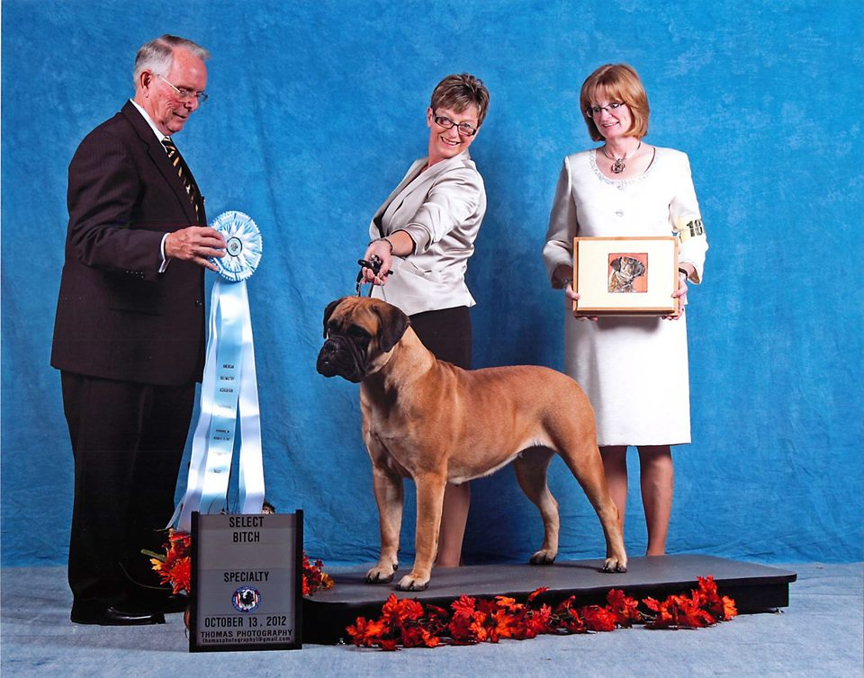 Bramstoke's Paige Turner Select Bitch American Bullmastiff Association National Specialty
