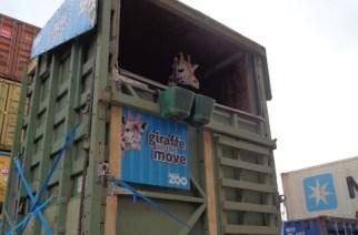 Hamburg Süd realiza transporte de girafa da Nova Zelândia para a Austrália