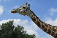 0234_Serengetipark_26-Jul-2014_Limberg