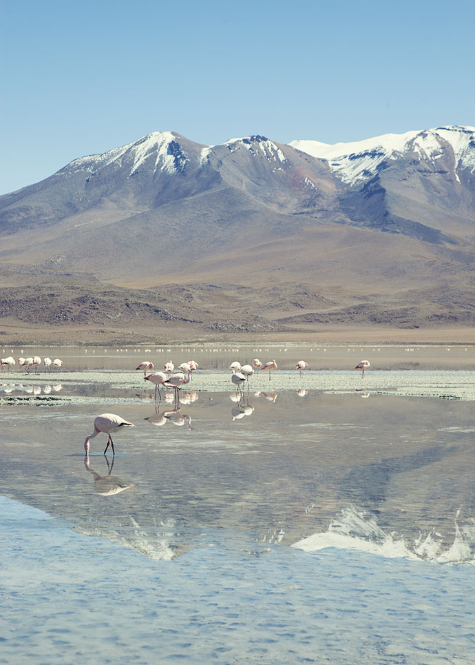 Flamingoes and montains Bolivia