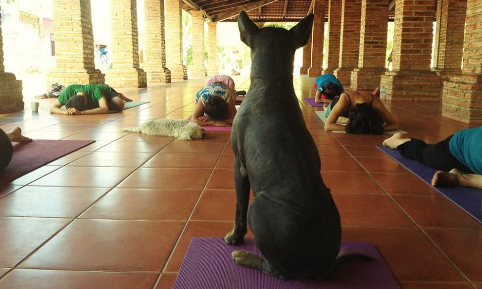 Dog yoga teacher in San Pancho, Mexico