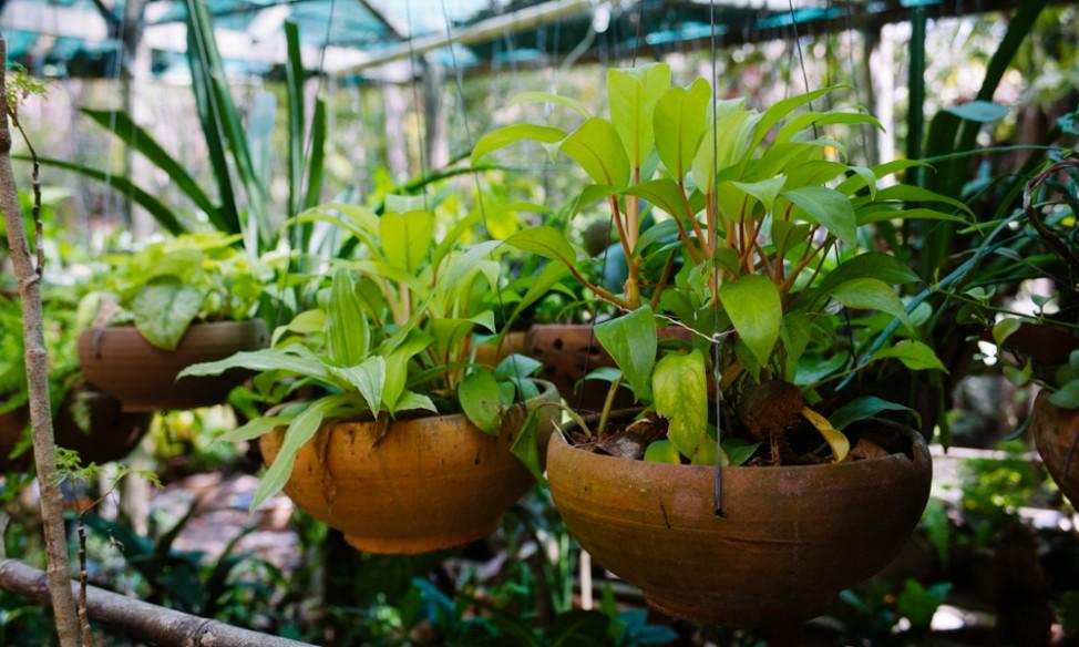 Plants at The Sanctuary Koh Phangan