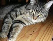 Missing Moggy: Oscar