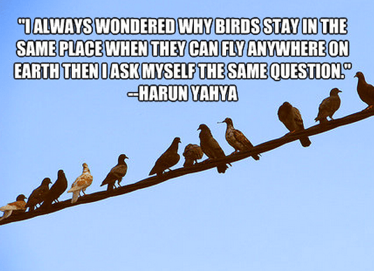 """""""I always wondered why birds stay in the same place when they can fly anywhere on earth then I ask myself the same question."""""""