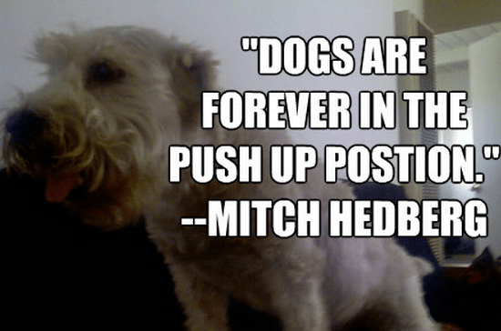 """Dogs are forever in the push up postion."""