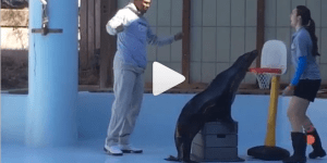 Russell Westbrook Played a Sea Lion in Basketball