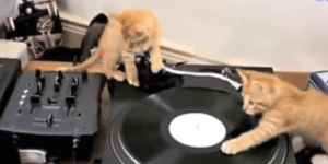 Coming soon to clubs you probably don't hang out in — kitten DJs