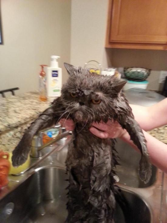 angry-wet-cat-lol