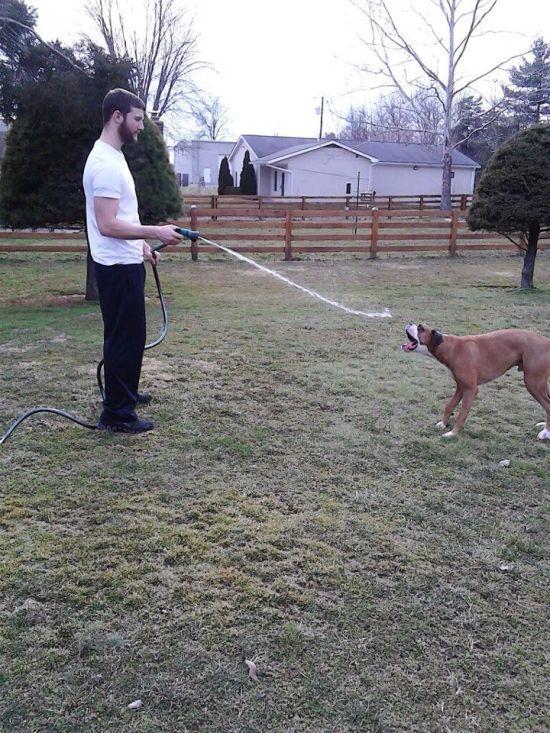 dog-sprayed-with-hose-timing