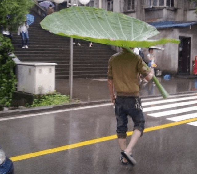 enormous-leaf-umbrella