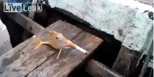 I Wanted to Love This Video of a Fish Smoking a Cigarette, But I Couldn't