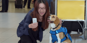 Lose Something At The Airport?  Don't Worry, This Dog Bro Has Got You Covered